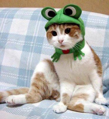 cat-hat.jpg